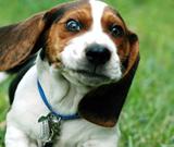 超级可爱淘气狗狗